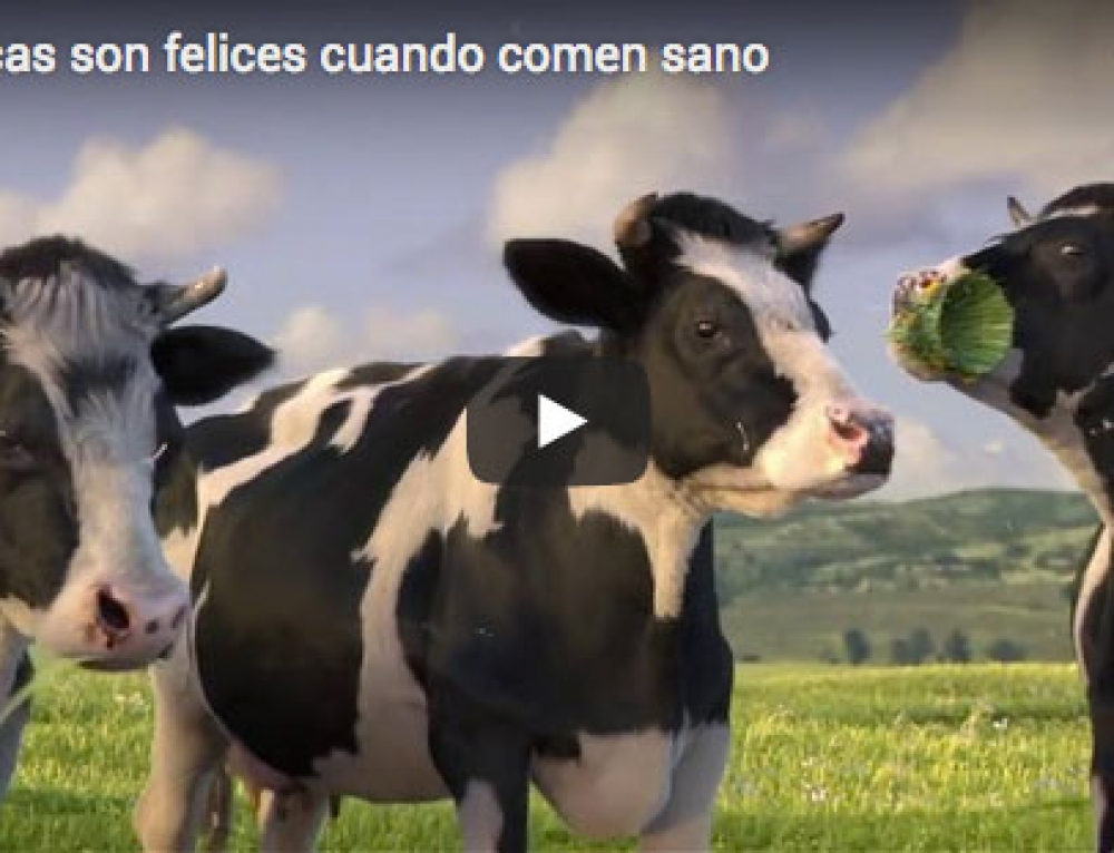 Cows are happy when they eat healthy